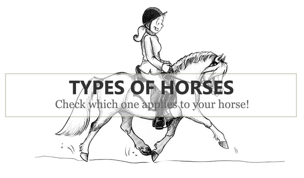 typy-koni-a-jaki-jest-twoj-kon