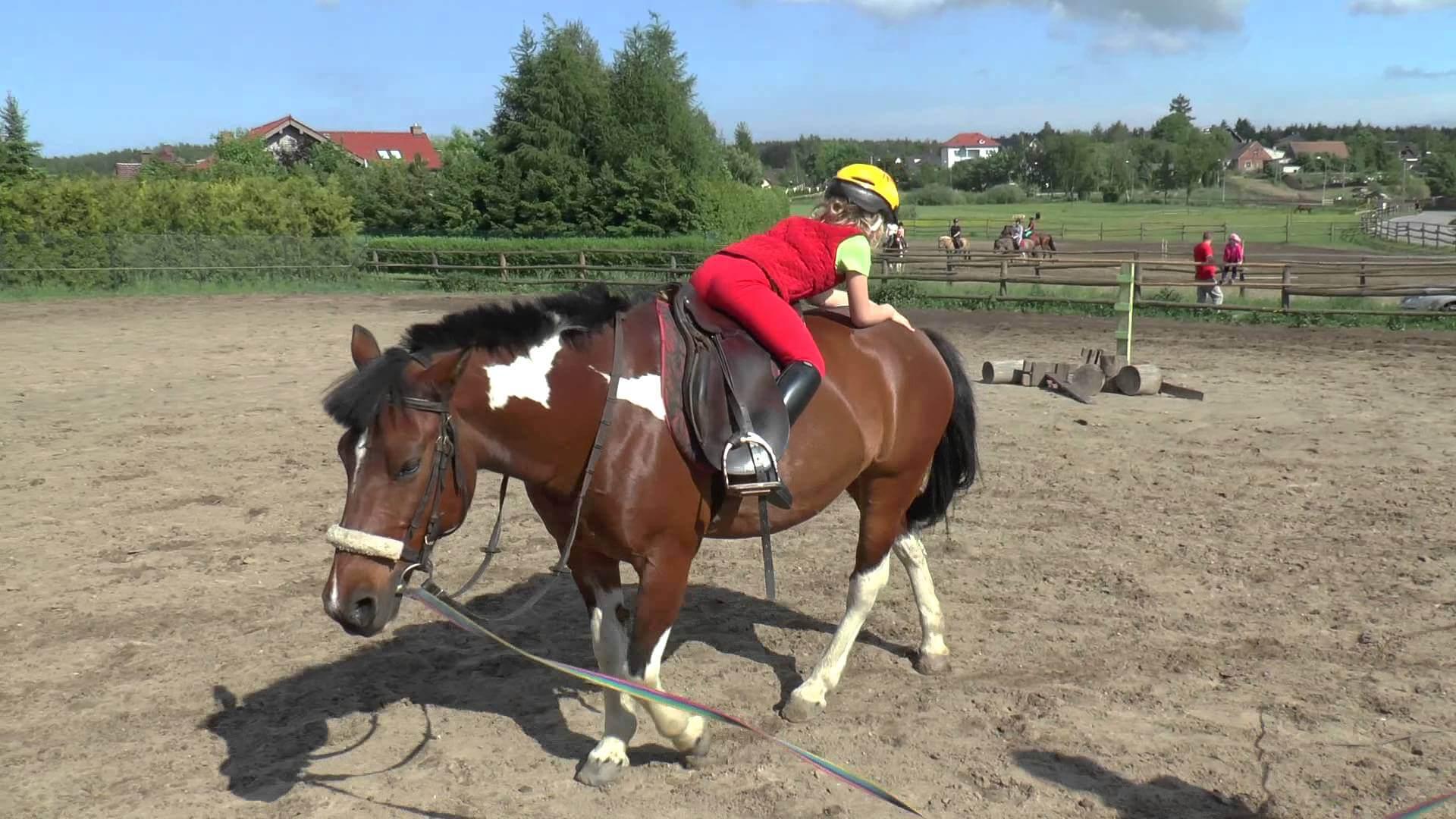 b325c1504295f Pierwsza lekcja jazdy konnej - jak zbudować solidne podstawy Sklep ...