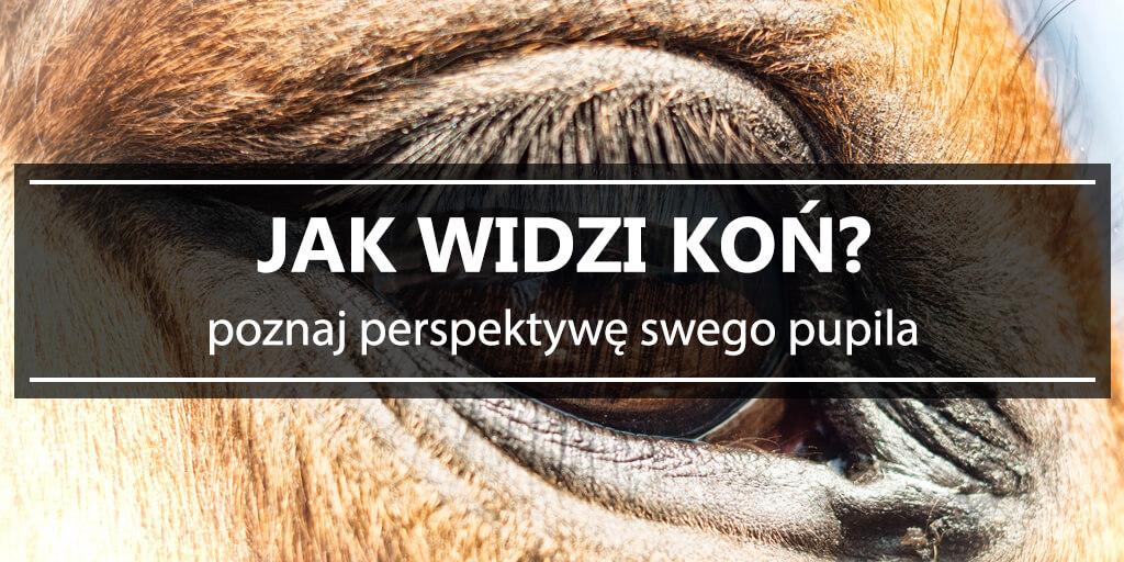 Historie Frontowe w Porbce. Przygotowano gr - whineymomma.com