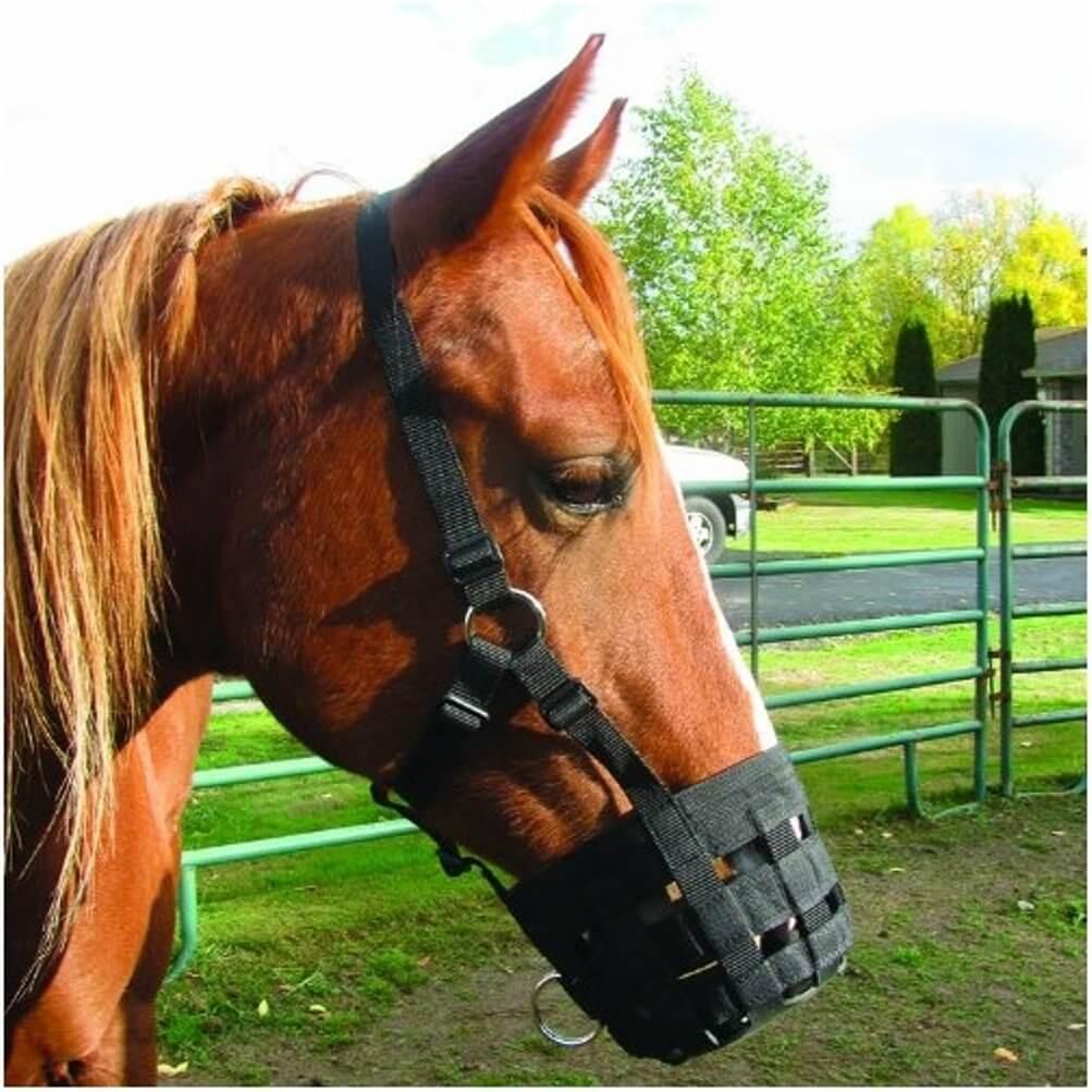 Horses Habits Cribbing Equishop Equestrian Shop