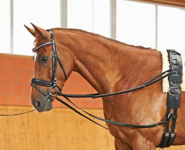 Lunging step by step EQUISHOP Equestrian Shop