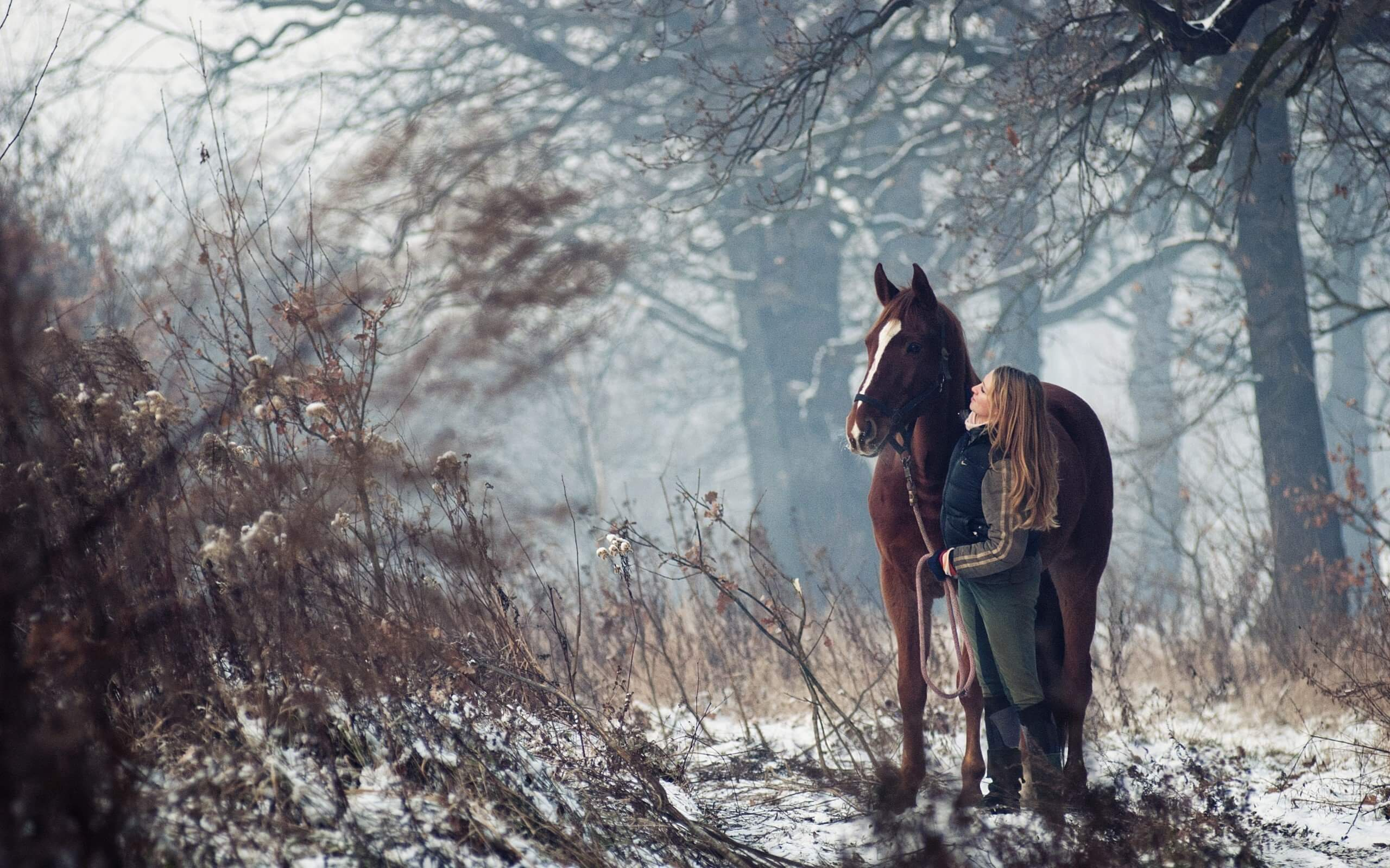 winter: horse and rider