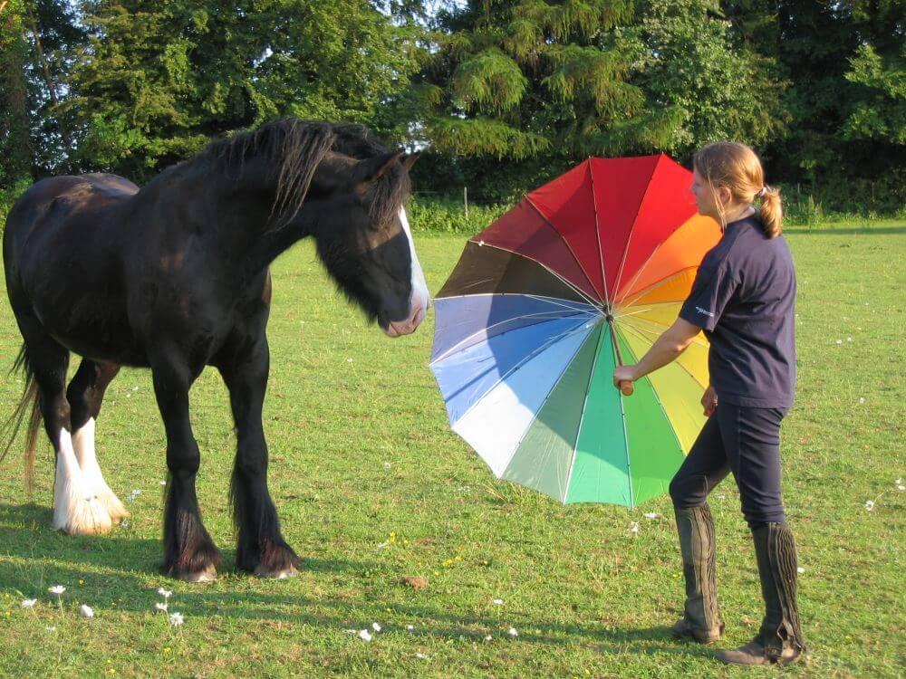 przyzwyczajanie konia