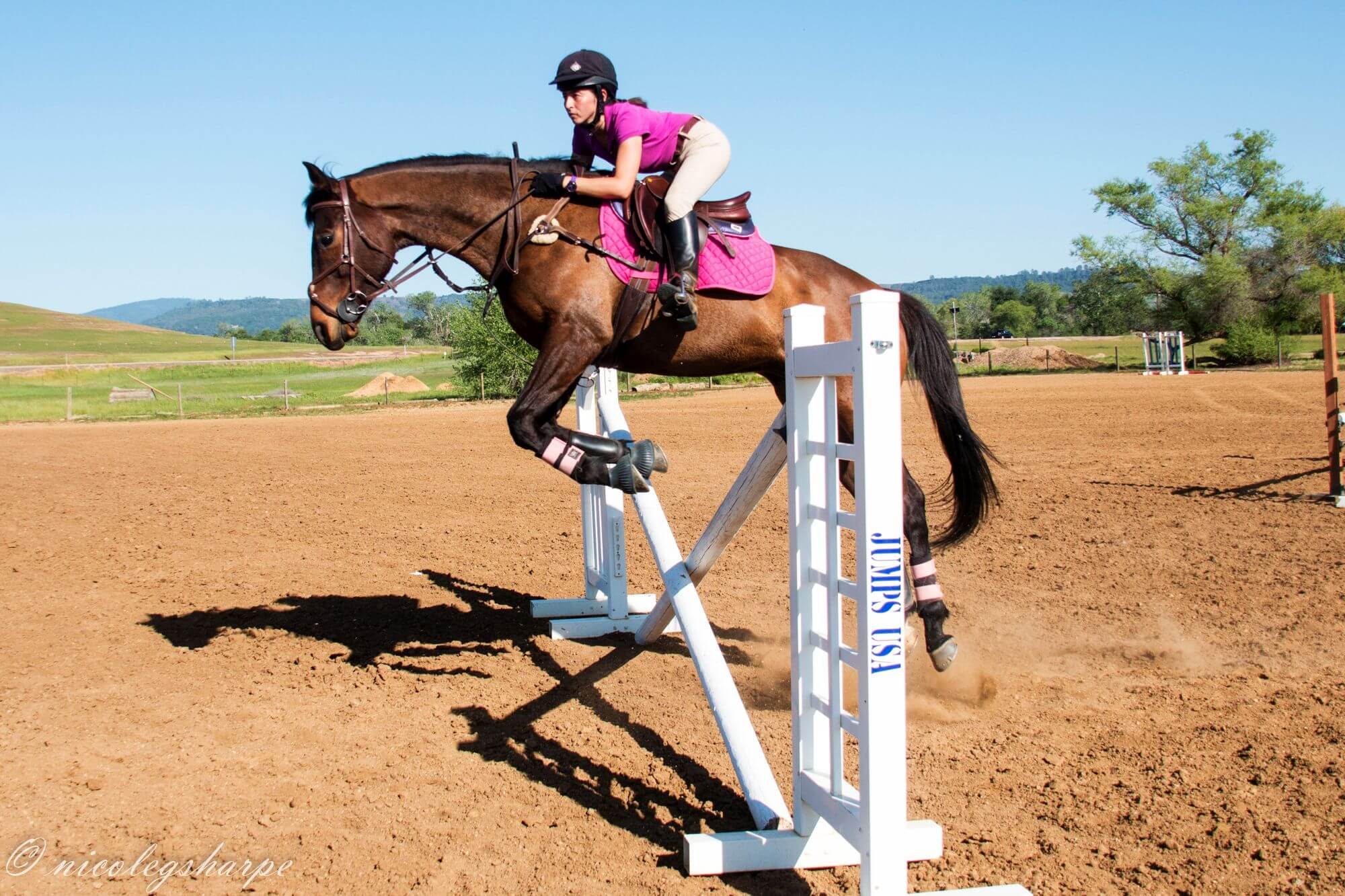 First Jumps With A Young Horse A Few Rules And Tips Equishop Equestrian Shop