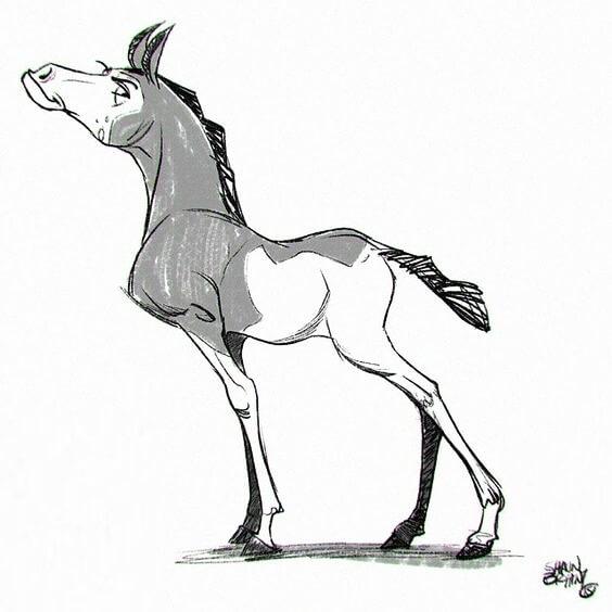 typ konia - rozpieszczony