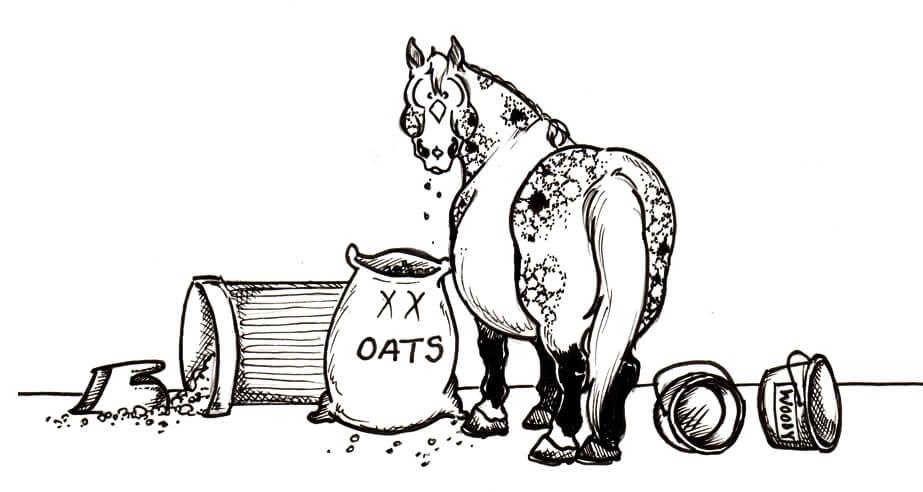 typ konia - wiecznie głodny