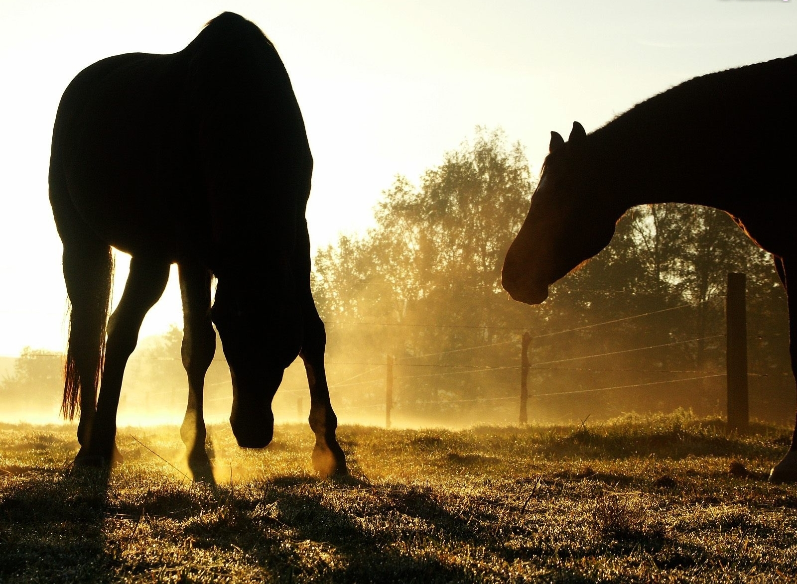 Dodatki i suplementy dla koni