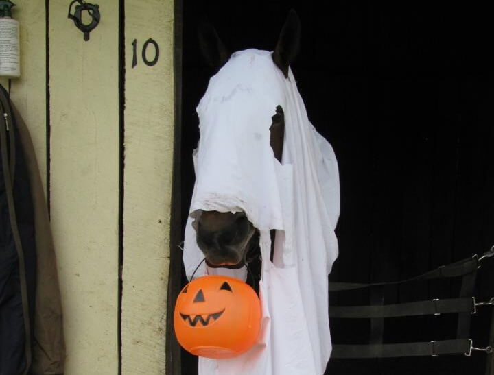 duch kostium halloween dla konia