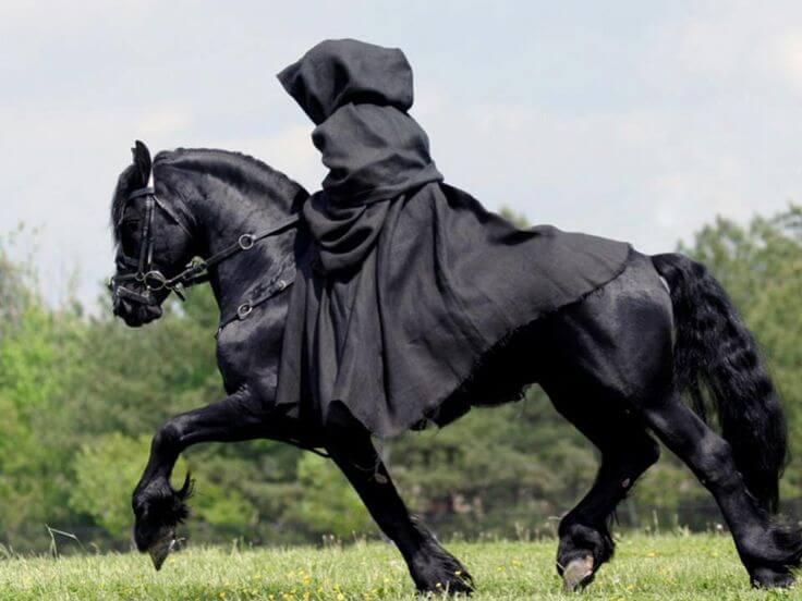 mroczny jeździec kostium halloween dla konia
