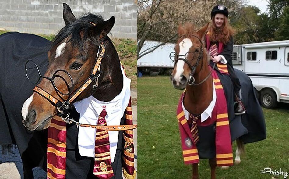 harry potter kostium halloween dla konia