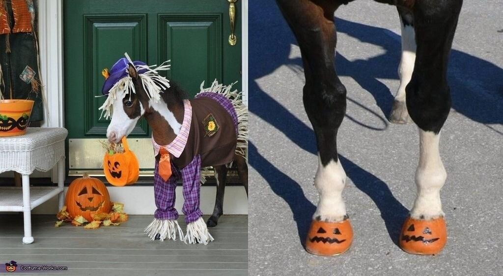 strach na wróble kostium halloween dla konia