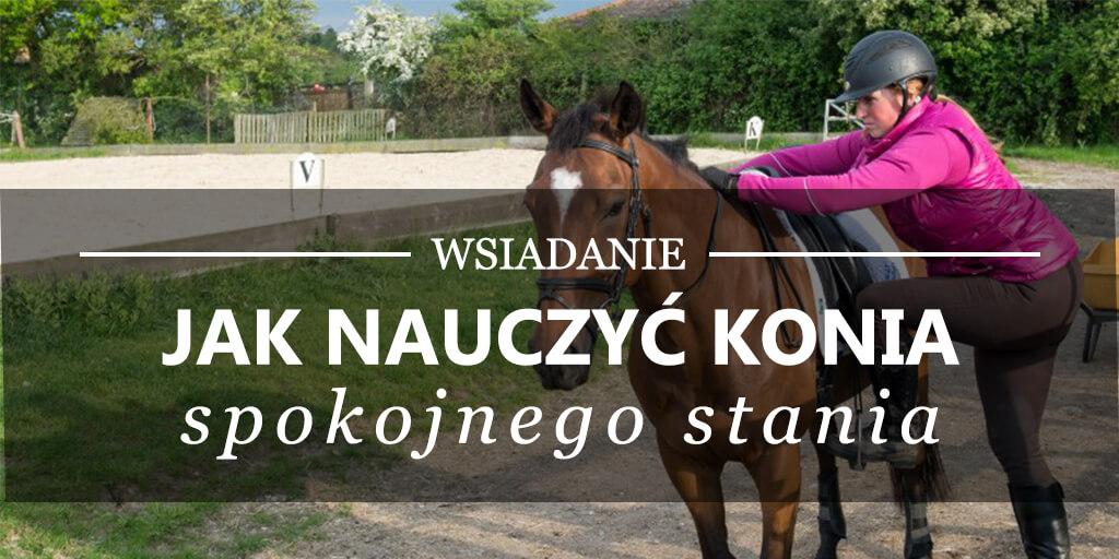 Wsiadanie - jak nauczyć konia spokojnego stania