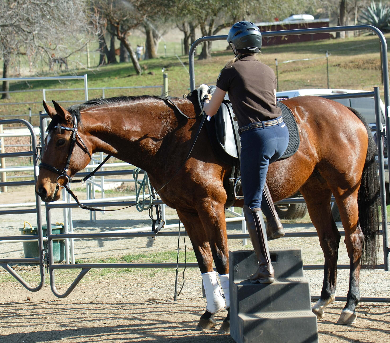 jak nauczyć konia spokojnego stania