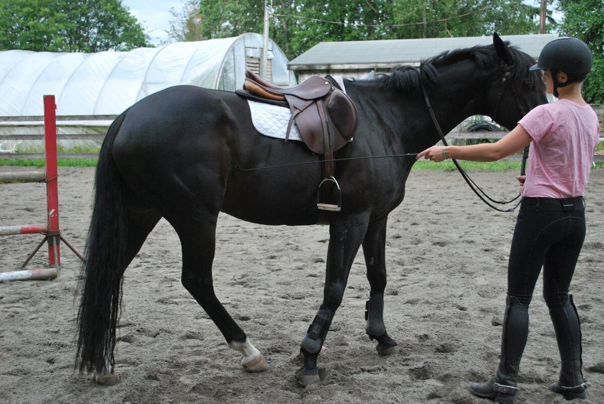 nauka konia z ziemi