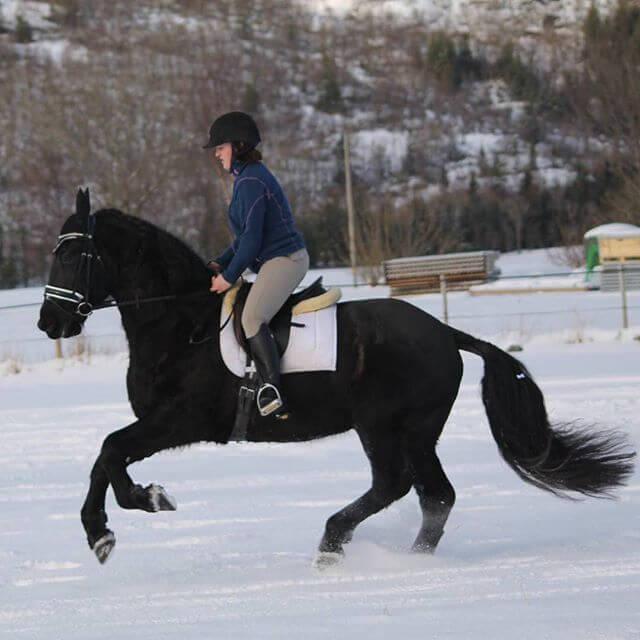 zimowa przejażdżka konna