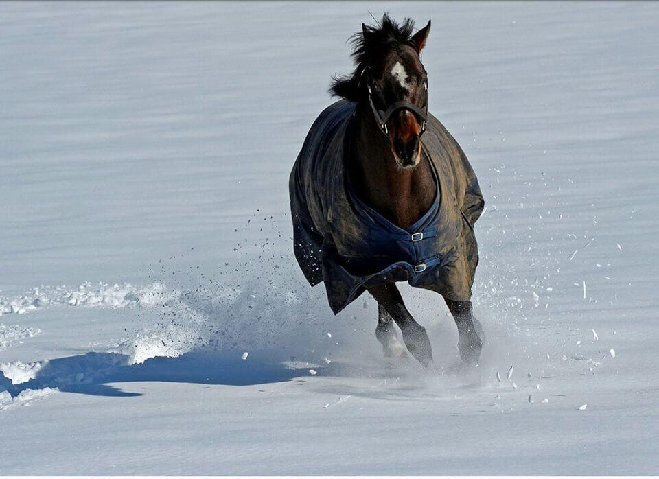 przegrzanie odwodnienie konia