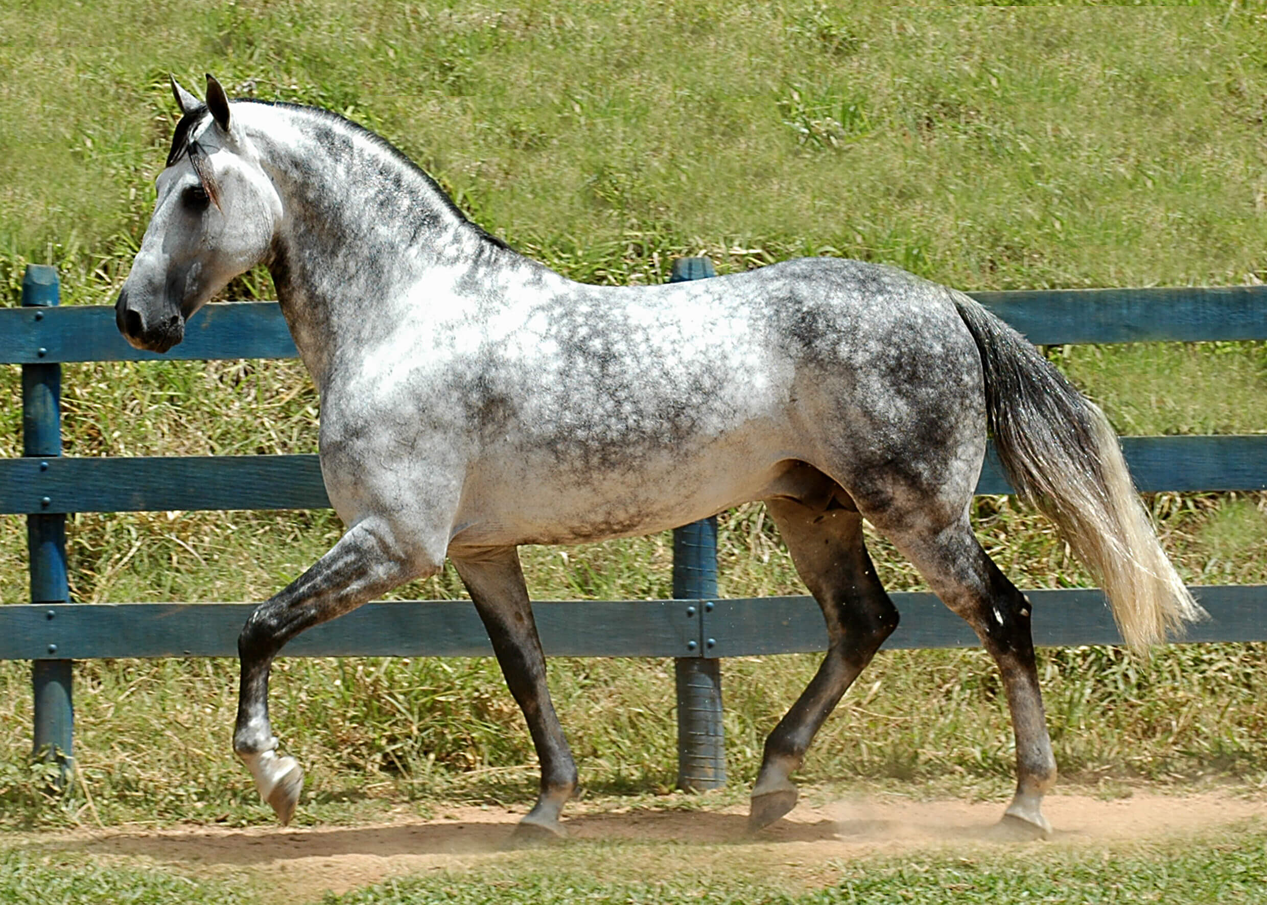 Horse Breeds Information Pictures