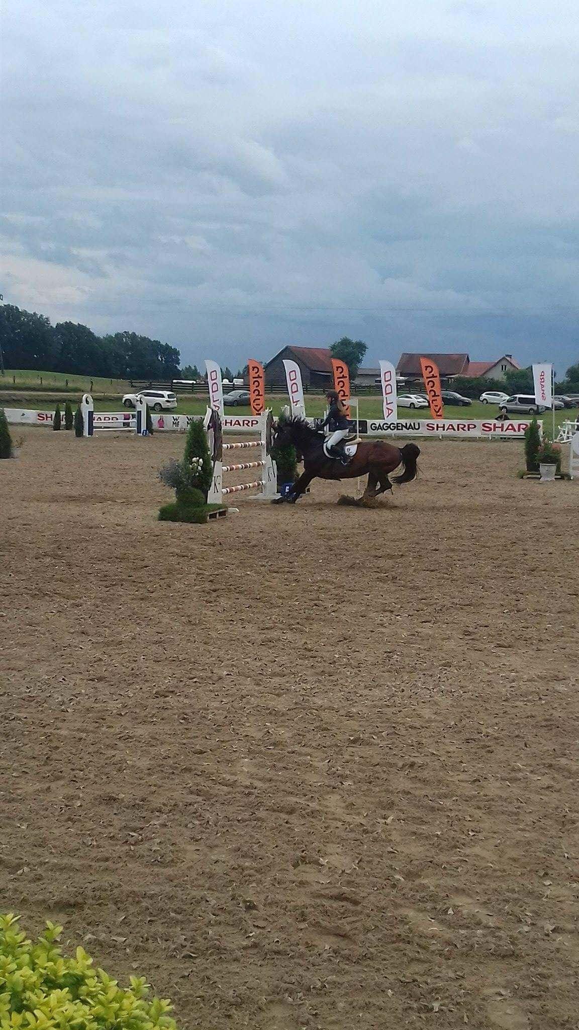 Koń nie pokonuje przeszkody podczas Gałkowo Masters