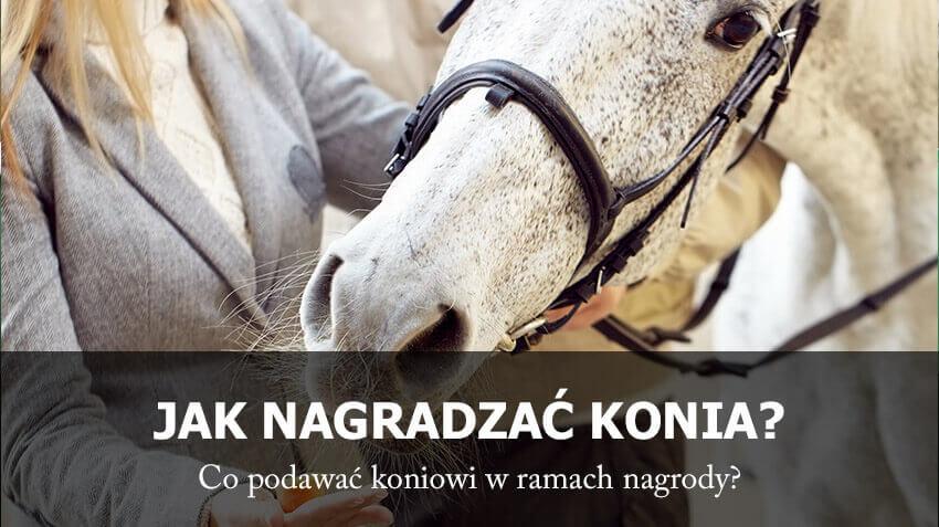 29d1d153e240c Jak nagradzać konia? - EQUISHOP Sklep jeździecki