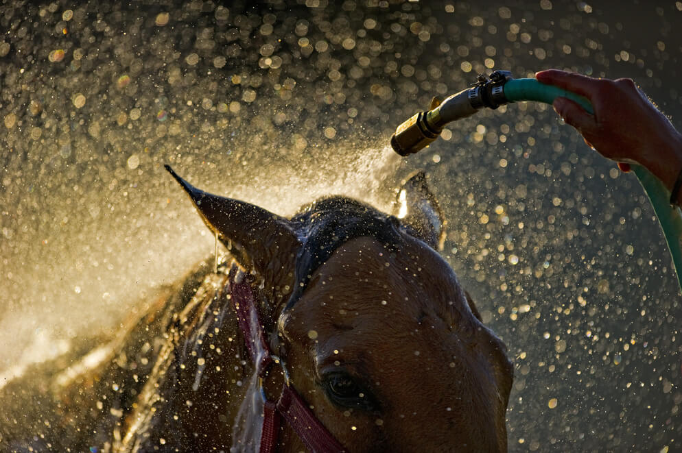 watering a horse