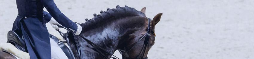 Jeździec w siodle ujeżdżeniowym