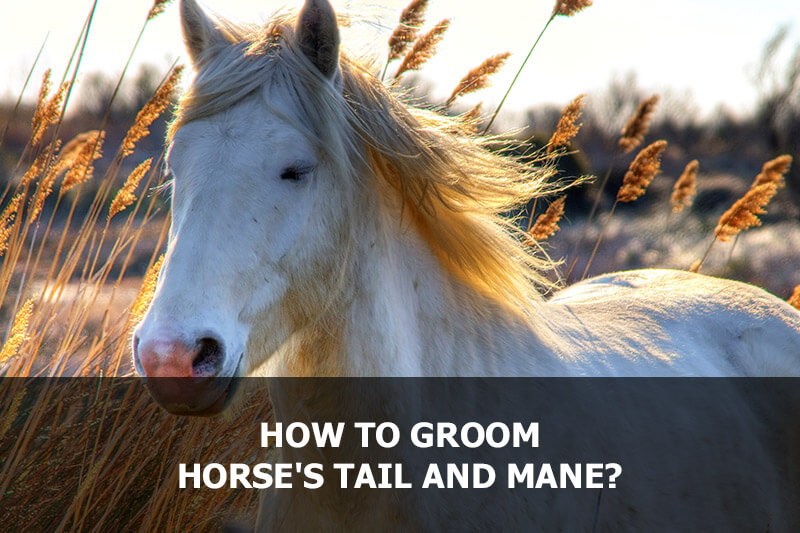 How to groom horse's tail and mane