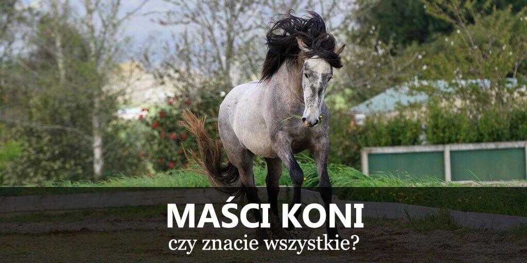 Maści koni, umaszczenie koni, wzory koni