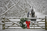 TOP 10 - equestrian Christmas gifts!