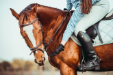 ELECTROLYTES FOR HORSES