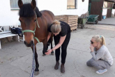 Interview with Anna Bajko - osteopath and expert in helping horses