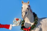 EQUESTRIAN EQUIPMENT FOR CHRISTMAS 2018