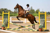 Show jumping - what to do with a horse who... part 4